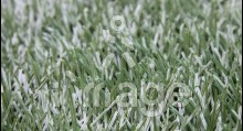 Штучна трава MoonGrass Sport (Футбол однокольорова) 40 мм Китай