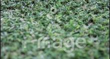 Штучна трава MoonGrass 20 мм Китай