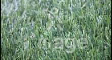 Штучна трава MoonGrass 40 мм Китай